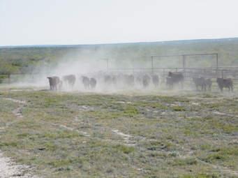 Farm, For Sale, Listing ID 1197, Tuttle, Kidder, North Dakota, United States, 58488,
