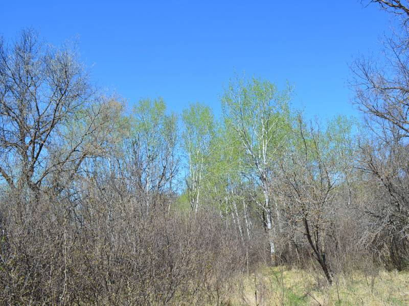 Evenson Oak Mtn,Bottienau,North Dakota 58318,Lot,Evenson Oak Mtn,1219