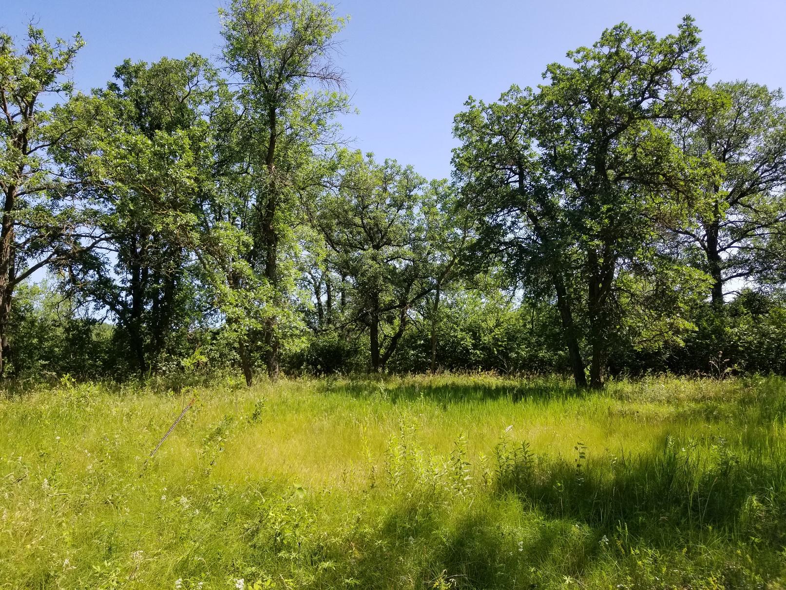 Rural, For Sale, 101st street Ave, Listing ID 1246, Bottineau, North Dakota, United States, 58318,