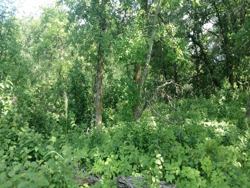#3 Metigoshe Estates,Bottineau,North Dakota 58318,Lake,Metigoshe Estates,1251